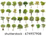 isolated tree on white... | Shutterstock . vector #674957908