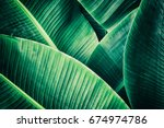 tropical leaf  large palm... | Shutterstock . vector #674974786