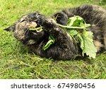 Cat Rolling In Grass Destroyin...