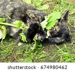 Calico Cat Hugging And Eating...