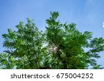 the silhouette of tree stands... | Shutterstock . vector #675004252