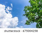 the silhouette of flower and... | Shutterstock . vector #675004258