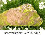 flowers and stones | Shutterstock . vector #675007315