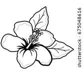 hawaiian hibiscus flower. black ... | Shutterstock .eps vector #675048616