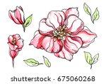pink tropical flowers blossom... | Shutterstock . vector #675060268