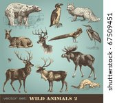 vector set  wild animals  2  | Shutterstock .eps vector #67509451