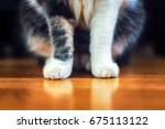 cute sitting cat paws closeup.... | Shutterstock . vector #675113122