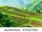 Rice Terraces In Tua Chua...