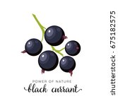 black currant berry flat icon... | Shutterstock .eps vector #675182575