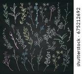 chalk drawing hand drawn herbs  ... | Shutterstock .eps vector #675212692