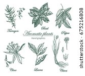 graphic set of aromatic plants. ... | Shutterstock .eps vector #675216808