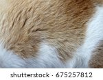 cat hair selective focus... | Shutterstock . vector #675257812