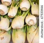 Close shot on fennel arranged for a market display - stock photo