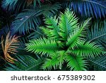 the top view on the green ferns ... | Shutterstock . vector #675389302