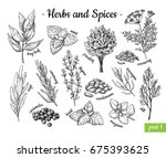 herbs and spices. hand drawn... | Shutterstock .eps vector #675393625