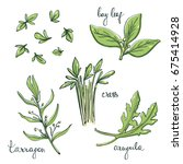 culinary herbs and salad leaves ... | Shutterstock .eps vector #675414928