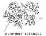rose flowers drawing and sketch ... | Shutterstock .eps vector #675436372