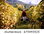 A Farmer Is Harvesting Grapes...