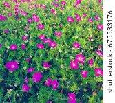 background with purple garden... | Shutterstock . vector #675533176