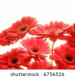 Close-up of red gerbera flowers against white background - stock photo