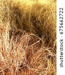 Small photo of Long Grasses