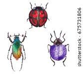 watercolor beetle   Shutterstock . vector #675731806