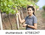 Asian Girl with grapes in the vineyards of Thailand - stock photo