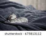 sleeping cute gray kitten on... | Shutterstock . vector #675813112