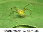 lynx spider on leaf background | Shutterstock . vector #675874336