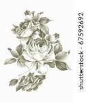 old styled rose. freehand... | Shutterstock . vector #67592692