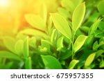 closeup nature view of green... | Shutterstock . vector #675957355