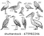 collection of birds... | Shutterstock .eps vector #675982246