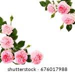 frame of pink roses  shrub rose ... | Shutterstock . vector #676017988