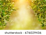 olive branches background ... | Shutterstock . vector #676029436