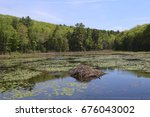 Beaver Lodge at Pleasant Valley Wildlife Sanctuary, Lenox, Massachusetts