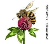 Bee On Clover Flower Sketch....