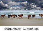 corolla wild horses on the... | Shutterstock . vector #676085386