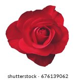 Stock photo red rose isolated 676139062