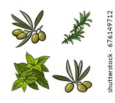 olives  mint and rosemary herbs ... | Shutterstock .eps vector #676149712