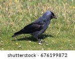 a western jackdaw  also known...   Shutterstock . vector #676199872