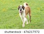 saint bernard | Shutterstock . vector #676217572