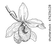 orchid flower. the sketch...   Shutterstock .eps vector #676256128
