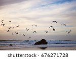 Seagulls Flying. Pacific Ocean...