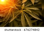 bush marijuana on blurred ... | Shutterstock . vector #676274842