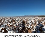 cotton field | Shutterstock . vector #676293292