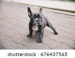 Stock photo adorable french bulldog puppy 676437565