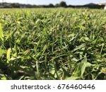 green grass | Shutterstock . vector #676460446