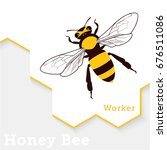 honey bee vector illustration... | Shutterstock .eps vector #676511086