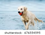Stock photo a dog runs along the beach in a spray of water a golden retriever 676554595