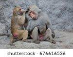 hamadryas baboon  papio... | Shutterstock . vector #676616536